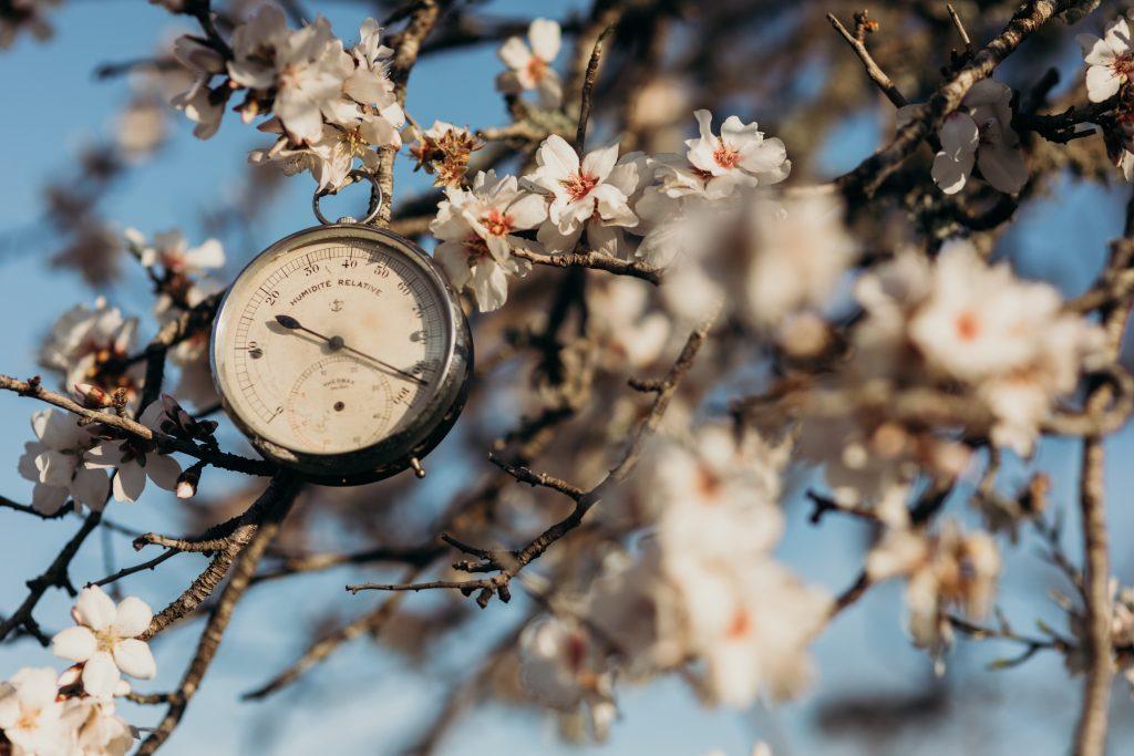 almendro en flor ibiza